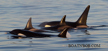 British  Columbia Boating License Whale Watching